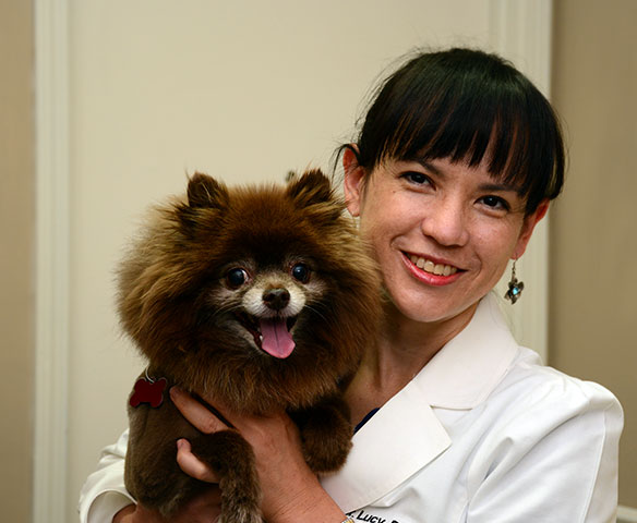 Excellence in Veterinary Care