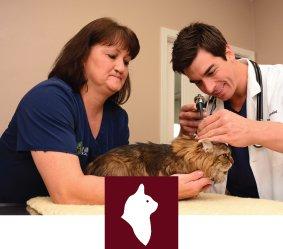 Feline Care Tuscaloosa AL