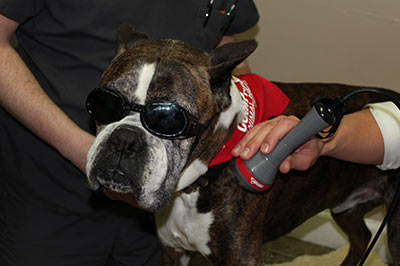 Pet Laser Therapy Tuscaloosa AL