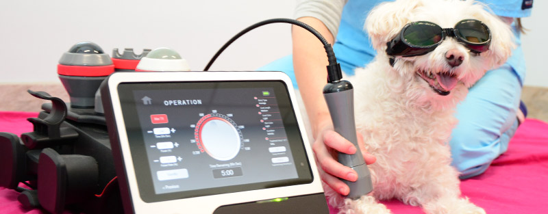 Laser therapy in Tuscaloosa & Northport AL