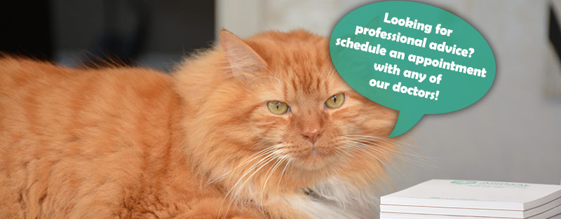 Educational Links from Animal Medical Center in Tuscaloosa and Northport AL