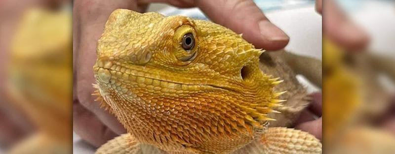 Reptile Veterinary Care in Tuscaloosa & Northport AL