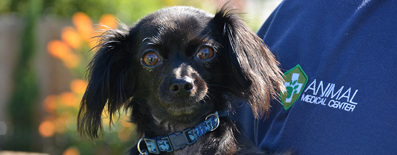 Senior dog veterinarian at Animal Medical Center in Tuscaloosa and Northport AL