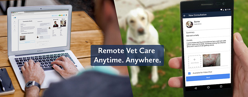 Virtual Veterinary Care in Tuscaloosa & Northport AL
