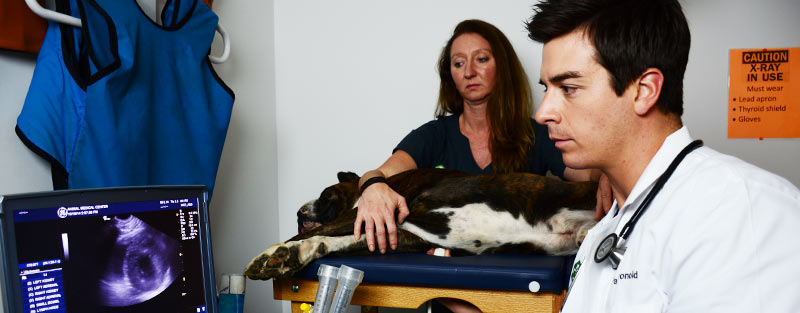 Veterinary Ultrasound Services in Tuscaloosa and Northport AL