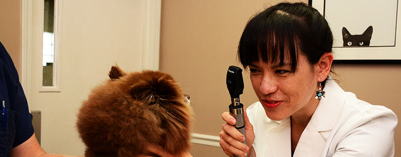 Veterinary Surgery for your Dogs and Cats in Tuscaloosa and Northport AL