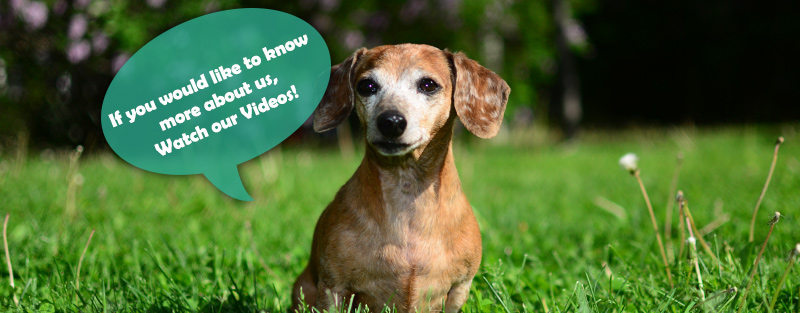 Watch our Videos at Animal Medical Center in Tuscaloosa and Northport AL